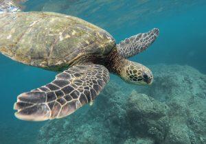 pronto soccorso di tartarughe marine