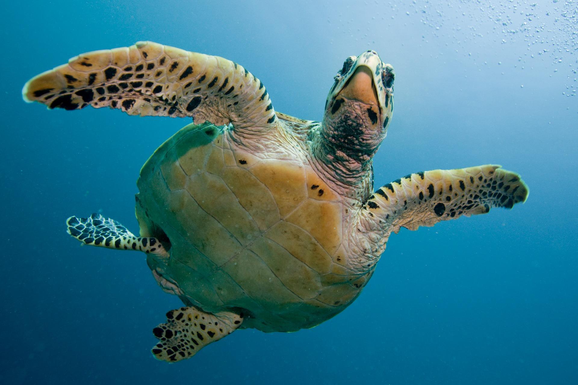 Il pronto soccorso per le tartarughe marine di Filicudi